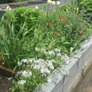 Raised Garden Box Overflowing with Flowers and Greenery